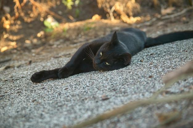 地面に横たわっている黒猫の銃口が先を見据えている
