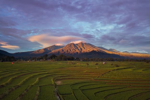 인도네시아 벵 쿨루 북부의 푸른 산이있는 논의 자연미