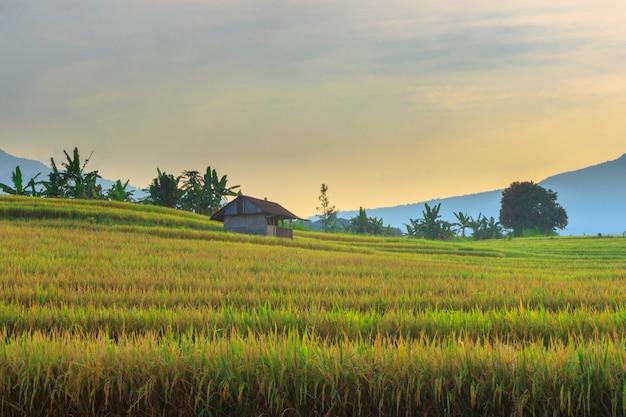 インドネシアの日の出の田んぼと山々の朝の雰囲気と田舎の自然の美しさ