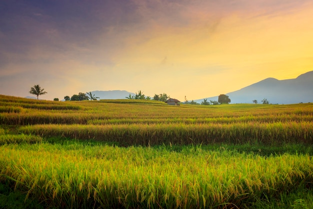 インドネシア、北ブンクルの日の出の田んぼと山々の朝の雰囲気と田園地帯の自然の美しさ