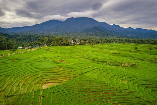 인도네시아 벵 쿨루 북부의 푸른 산이있는 논밭의 자연미