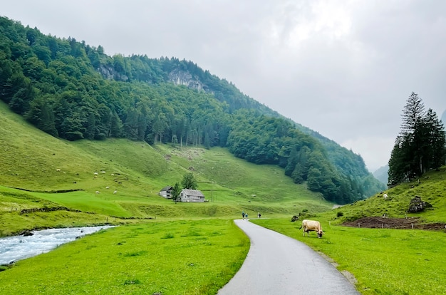 スイスの高地の自然景観。