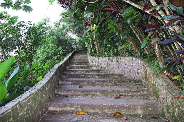 ブラジル、リオデジャネイロのシュガーローフ山の自然