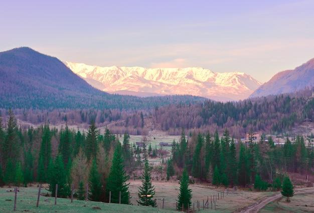 アルタイ山脈のnorthchui山脈山の谷のとがったモミの木雪山