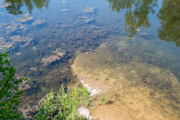 오래 된 자란 연못은 나무의 면류관을 반영합니다 여름 풍경