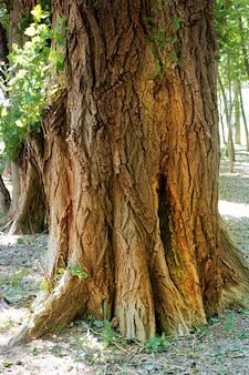 森の中の苔で覆われた古い切り株。朝