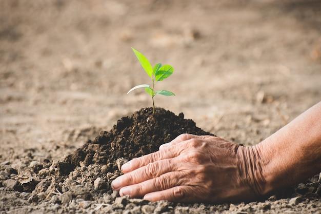 老婆の手は乾いた土に苗を植えていました。