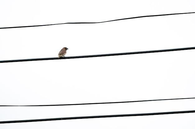 一羽の茶色の鳥は、開いた白い空で一人で電気ケーブルにぶら下がっています。
