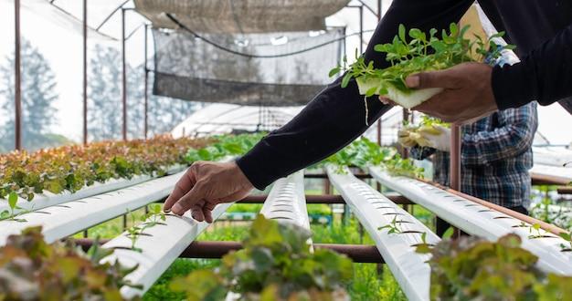 농촌의 유기농 수경 채소 재배 농장.