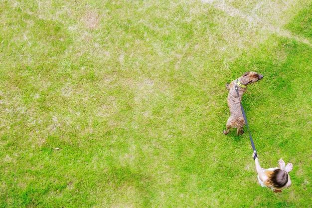 飼い主と犬は夏の日に芝生の上を歩いています。テキストの草の背景。スペースをコピーします。ぼかします。