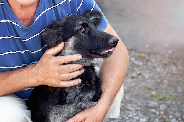 Хозяин обнял молодую собаку породы восточноевропейская овчарка, люди и животные.