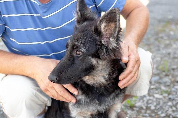 飼い主は若い犬種の東ヨーロッパの羊飼い、人と動物を抱きしめました