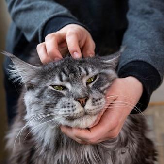 Хозяин гладит кошку мейн-кун. уход за домашними животными