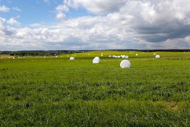 詰められた草-冬に動物に餌を与えることを目的とした草刈りと俵に詰められた草