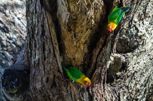 Попугаи выбирают гнездо в дупле, серенгети, танзания.