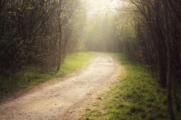 Тропинка в лесу, уходящая за поворотом, освещена утренним солнцем.