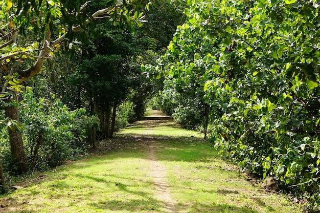 수풀 사이 공원의 경로입니다. 쿠알라룸푸르 교외 쿠알라 셀랑고르.