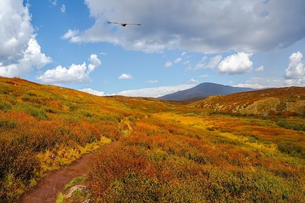 Тропа через берёзовый карлик (betula nana) осенью. яркие пейзажи гор и осенних лесов алтайского края, сибири.