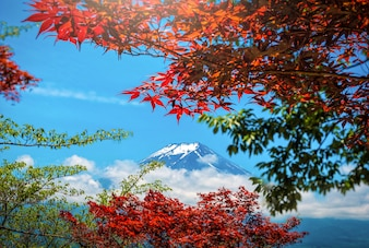 The Peak of Mt. Fuji with red and green leaf in the spring on daytime in Japan