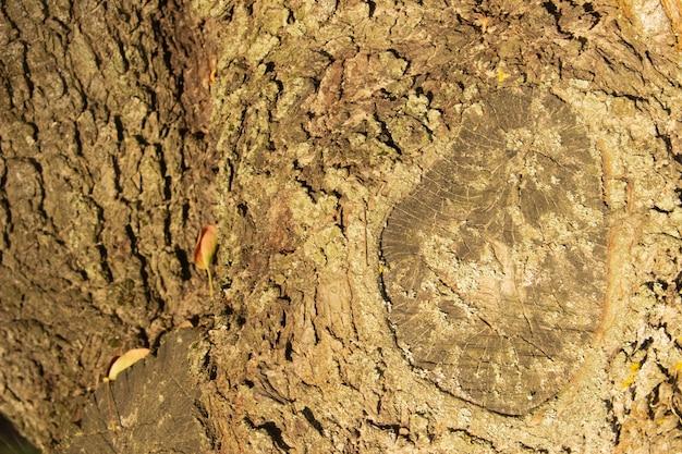 木の樹皮のクローズアップの写真。木材産業の背景。
