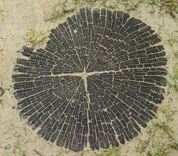クローズアップの木の樹皮または黒いカットスタブの写真。木材産業の背景。