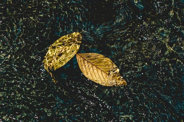 Картина желтых листьев под водой, протекающей через естественную концепцию с копией пространства