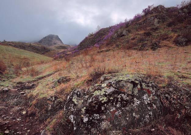 Живописный склон горы зарос желтой травой и розовым маральником.
