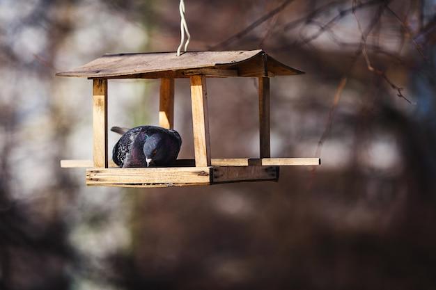 鳩は木にぶら下がっている鳥の餌箱に座っています。