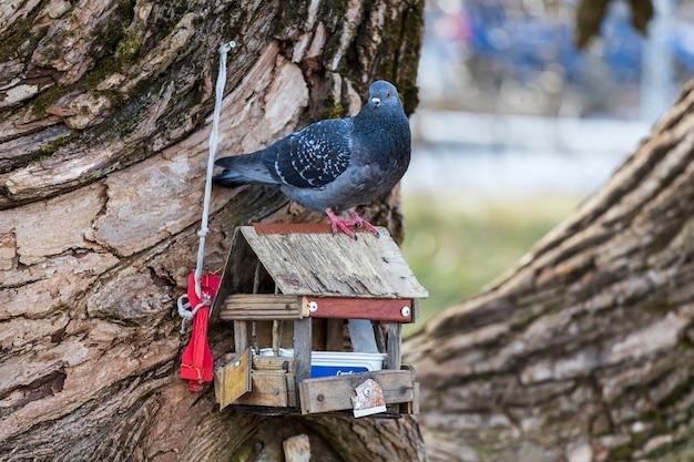 비둘기는 새 모이통에 앉아 있습니다. 도시의 새. 고품질 사진