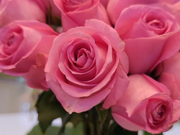 Фон из розовых роз на день святого валентина, день матери или открытка на день женщины