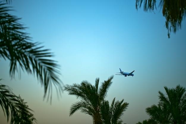 비행기가 출발합니다. 하늘과 야자수 잎