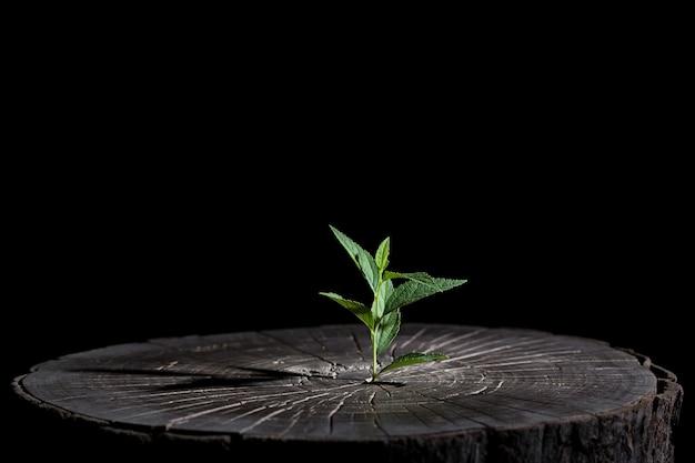 Растение растет в лесу