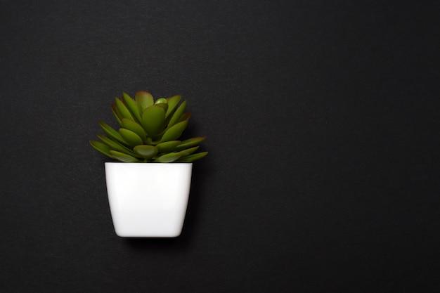 식물은 텍스트를 위한 공간이 있는 검정색 배경에 흰색 냄비에 있는 꽃입니다. 가정 원예, 관엽 식물의 사랑, 꽃 사업 개념. 복사 공간