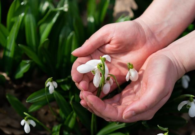 식물은 사람의 손에 있습니다. 손에 든 꽃은 인간과 자연의 일치를 상징합니다. 개념은 환경 친화입니다. 환경 보존.
