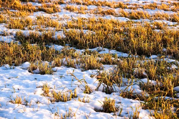 雪が降っている植物。春の季節
