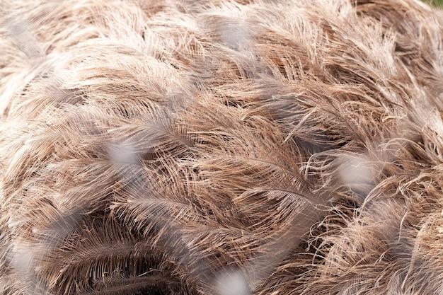 金属グリッドを通る大きな鳥のダチョウエミューの羽、鳥は動物園に住んでいます