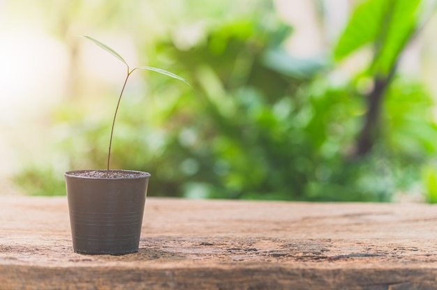 Горшки на столе. понятие любви к растениям.