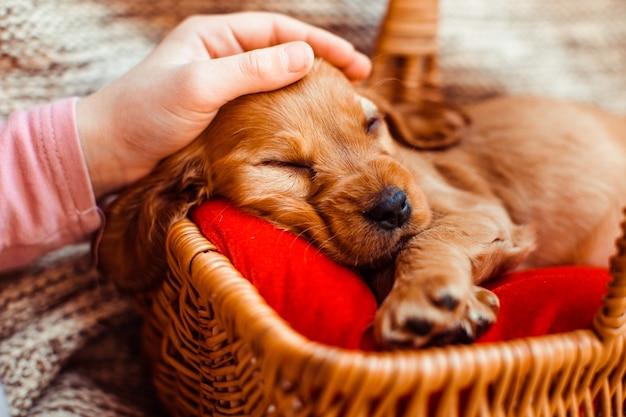 犬とバスケットを抱きしめているかわいい女の子