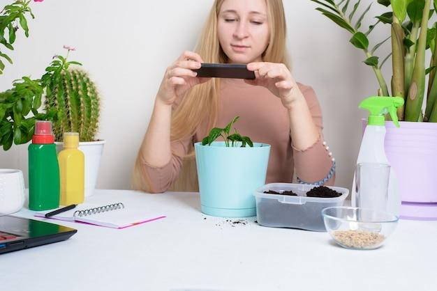집에서 발아하기 위해 냄비에 여성이 관엽 식물을 심는 과정