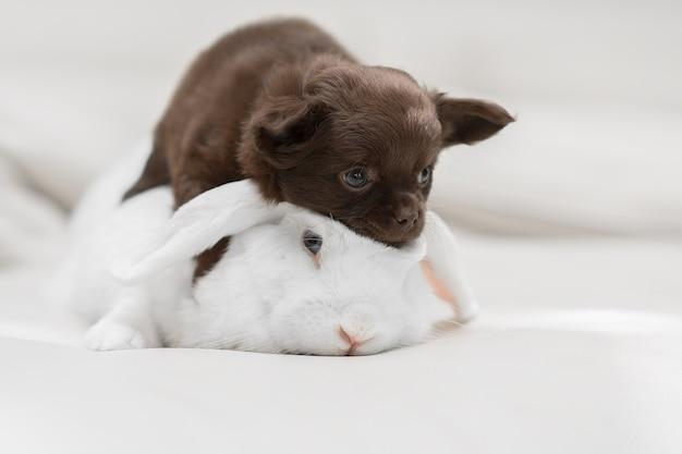 Щенок лежит на кролике