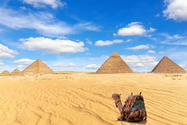 ギザのピラミッドとエジプトの砂浜にいるラクダ。