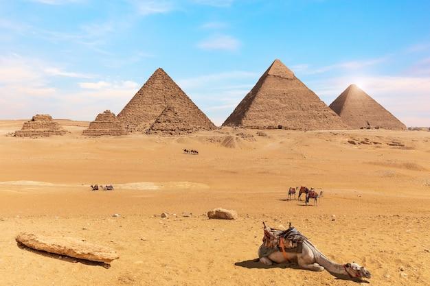 ギザのピラミッドとエジプトの砂漠のラクダ。