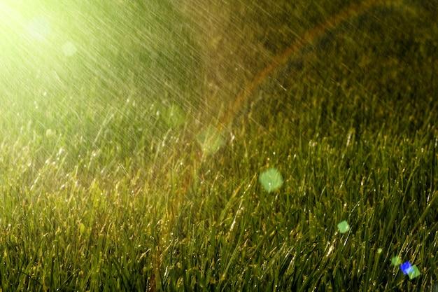 雨は草の上にあります