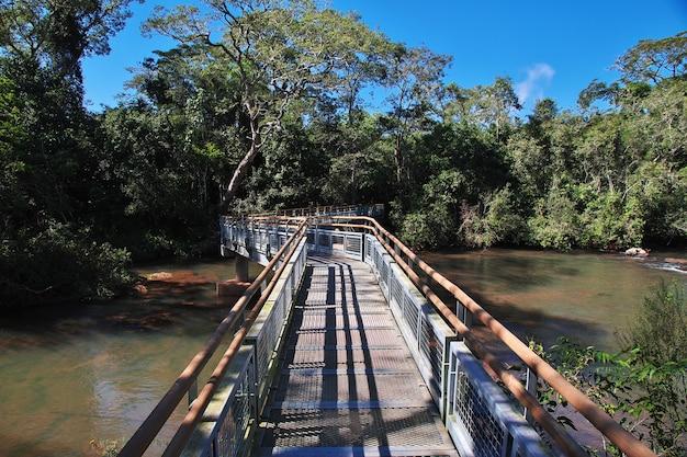 Тропический лес на игуасу падает в аргентине и бразилии.