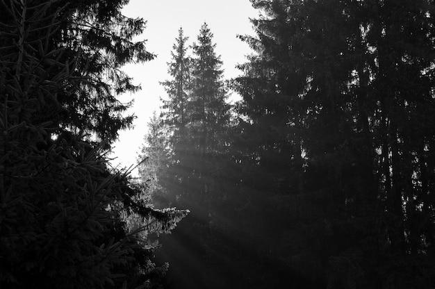 Лучи рассветного солнца сквозь деревья