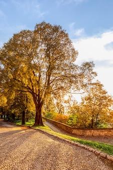 公園内の美しい秋の木々に夕日の光が差し込む(縦写真)