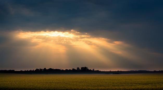 日の出の朝の麦畑の上の太陽の光線。日没時のフィールド上の暗い雲
