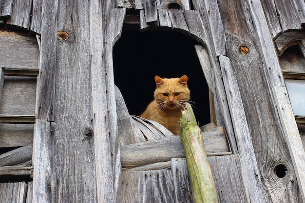 빨간 고양이가 낡은 창문에서 탈출