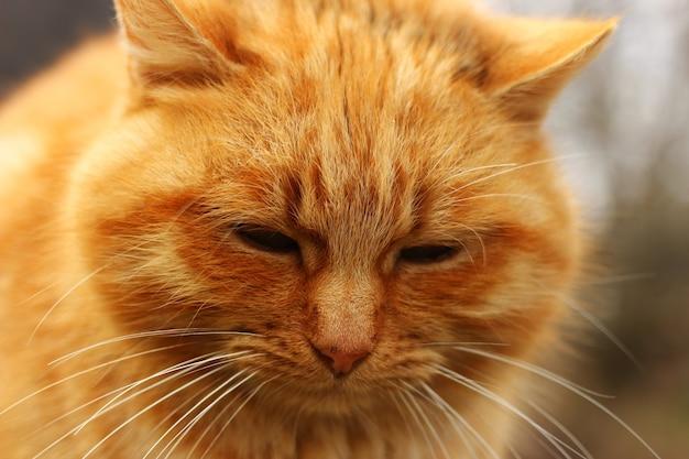 빨간 고양이는 부끄러워