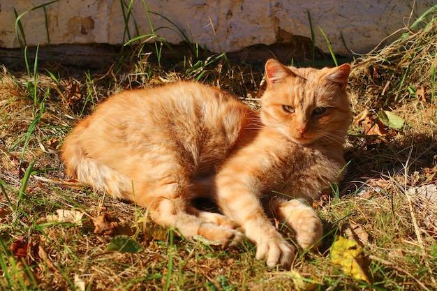 빨간 고양이가 햇볕에 따뜻해집니다